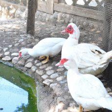 holyday-farm-la-mela-rossa-(11)