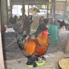 holyday-farm-la-mela-rossa-(13)