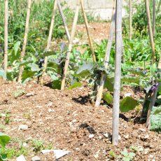 holyday-farm-la-mela-rossa-(15)