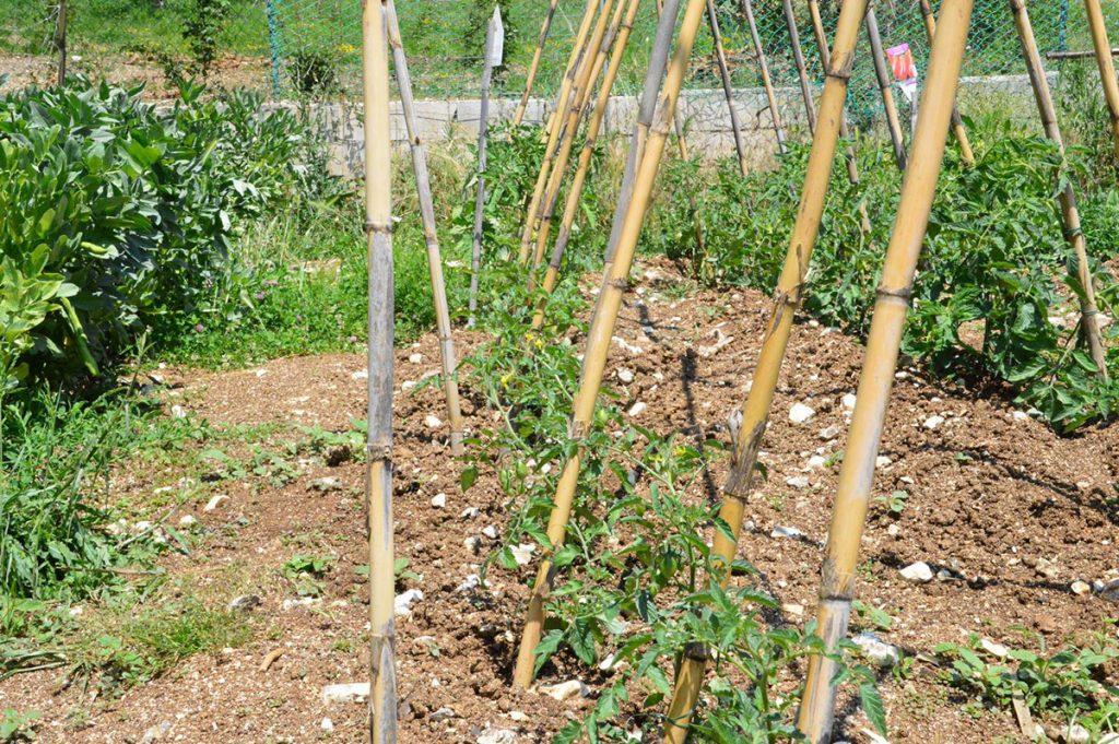 Storia della fattoria la mela rossa for Grandi planimetrie della fattoria