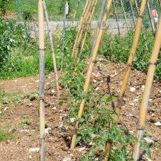 holyday-farm-la-mela-rossa-(5)